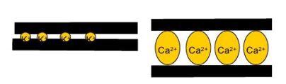 Calcium vergroot afstand kleiplaatjes.JPG