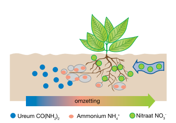 omzetting_ureum_ammonium_nitraat.png