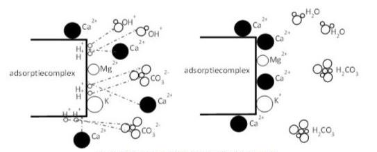 werking calcium CEC-complexx.JPG